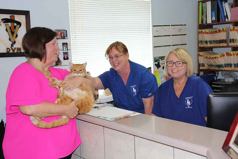 Staff petting orange cat